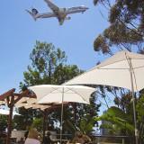 Flight Path Grill Flyover